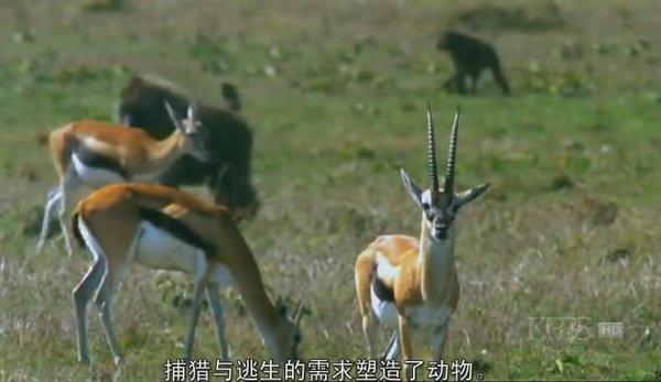 PBS 自然系列