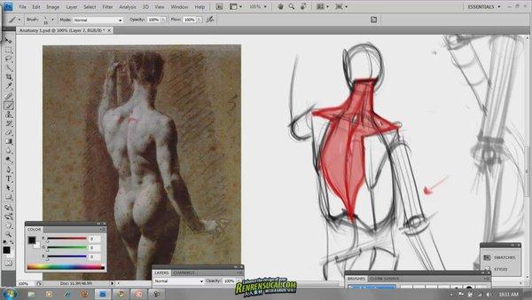 《人体结构解剖图绘制》(
