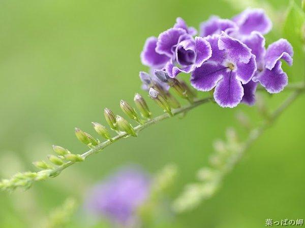 高精度个人花卉摄影集六