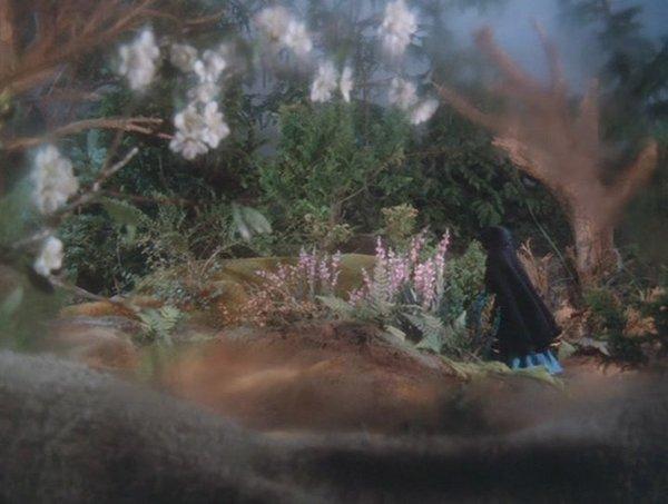 野玫瑰公主与睡美人