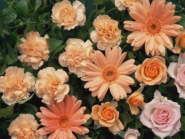 繁花似锦-花卉摄影壁纸