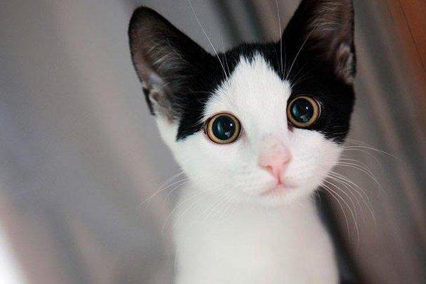 可爱猫咪萌宠图片带字