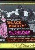 Black Beauty 海报