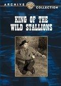 King of the Wild Stallions 海报