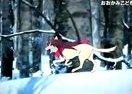 动画电影《狼之子雨与雪》特报1