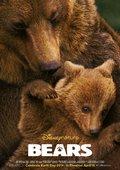 熊世界 海报