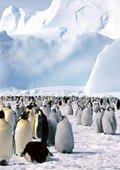 企鹅:一路摇摆 海报