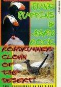 Roadrunner 海报