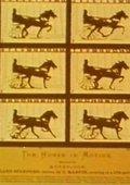 Eadweard Muybridge, Zoopraxographer 海报