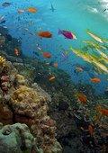 BBC:大堡礁 海报