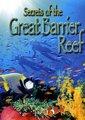 大堡礁的秘密