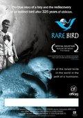 Rare Bird 海报