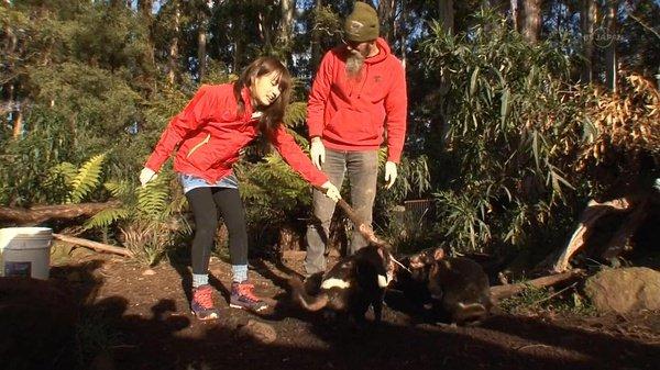 前往稀少动物的栖息地澳大利亚