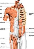 人體解剖 海報