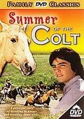 Summer of the Colt 海报