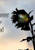 The Sunflower and the Sun God 海报