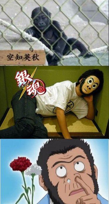 猩猩宝宝征名 空知英秋 成候选 引发日本网友热议图片