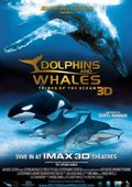 Dolphins and Whales 3D: Tribes of the Ocean 海报