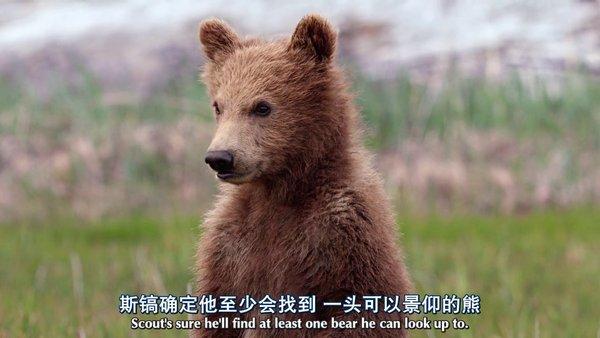 您的位置: 电驴大全 电影 熊世界 图片 > 查看图片 关注更新动态 已