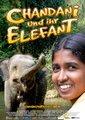 夏丹妮和她的象