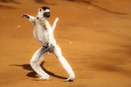 BBC纪录片《马达加斯加.Madagascar.2011》