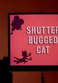 Shutter Bugged Cat 海报