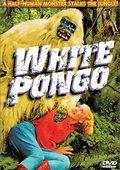 White Pongo 海报