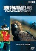 BBC:动物摄影机 海报