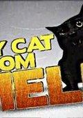 家有恶猫 海报