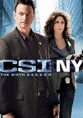 犯罪现场调查:纽约 第六季 海报