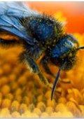 昆虫分类学导论