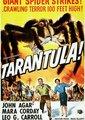 塔兰图拉毒蛛