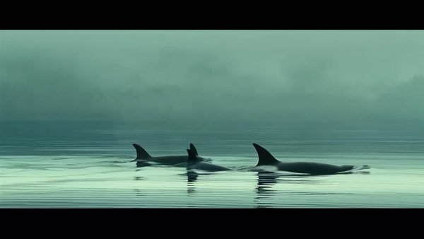 海洋(oceans) - 电影图片 | 电影剧照 | 高清海报