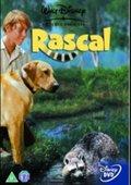 Rascal 海报