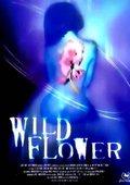 Wildflower 海报