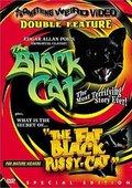 The Black Cat 海报