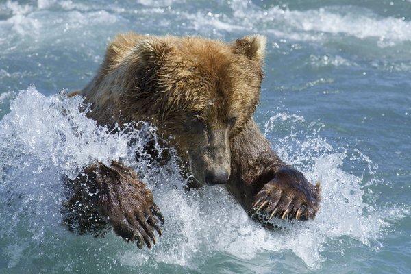 您的位置: 电驴大全 电影 熊世界 图片 > 查看图片 关注更新动态 已关