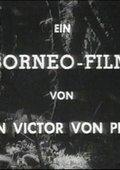 Kopfjäger von Borneo 海报