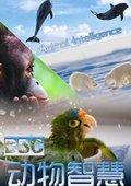 BBC之动物智慧 海报