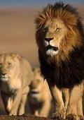 狂野非洲 海报