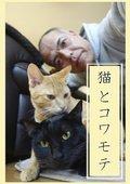 猫和凶相大叔 海报