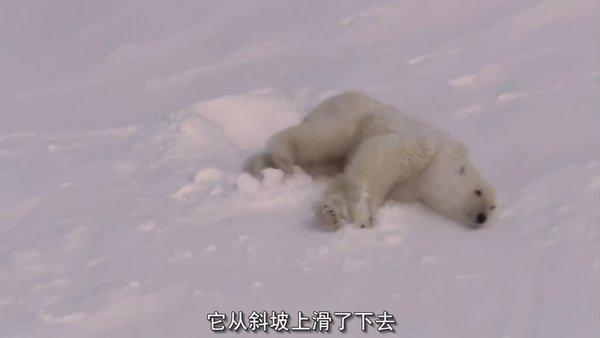 bbc动物照片头像素材