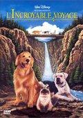 看狗在说话 海报