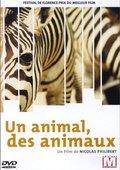 动物,动物们 海报
