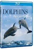 BBC:窥视海豚 海报