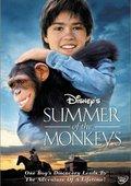 猴子的夏天 海报