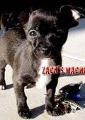 Zack's Machine 海报