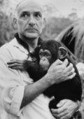 O Quinto Macaco 海报