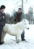 Levis hest 海报