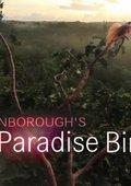 BBC:爱登堡的极乐鸟世界 海报